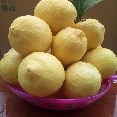 安岳柠檬 3.3 - 4.5两