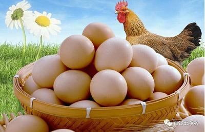 广东省肇庆市端州区草鸡蛋 食用 箱装