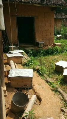 江西省萍乡市芦溪县土蜂蜜 塑料瓶装 80%以上 2年以上