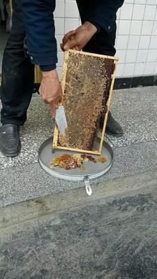 重庆秀山土家族苗族自治县土蜂蜜 塑料瓶装 100% 2年以上