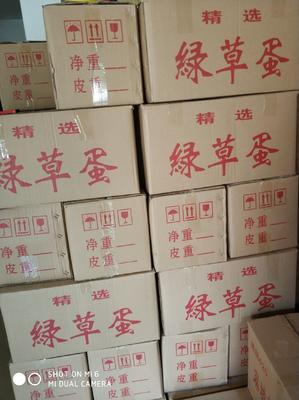 湖南省长沙市长沙县土鸡蛋 食用 箱装