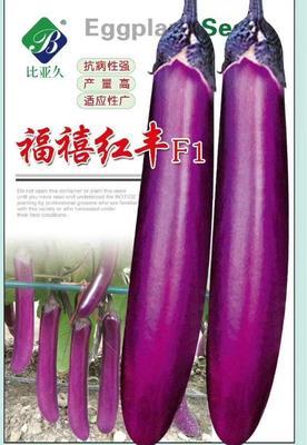 河南省周口市扶沟县茄子种子 ≥95% ≥99% 杂交种
