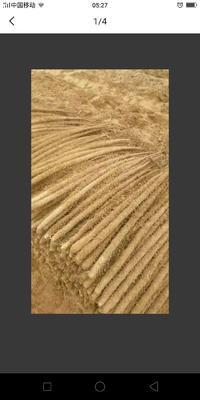 杩欐槸涓�寮犲叧浜庨搧妫嶅北鑽� 70~90cm鐨勪骇鍝佸浘鐗�
