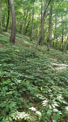 辽宁省灌木林地 转让 20~30年 150.0亩