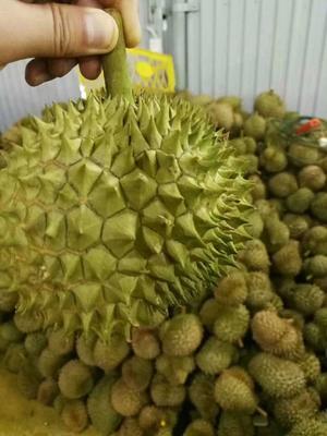 广西壮族自治区崇左市凭祥市巴掌榴莲 80 - 90%以上 2公斤以下