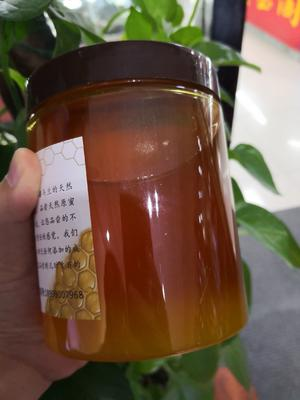 新疆维吾尔自治区巴音郭楞蒙古自治州库尔勒市土蜂蜜 塑料瓶装 100% 2年以上