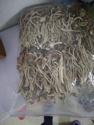 江西省抚州市广昌县广昌3号茶树菇 6~8cm 未开伞 干茶树菇