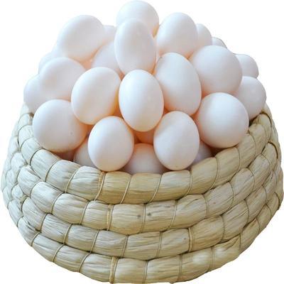 河南省驻马店市确山县银羽王鸽子蛋 食用 散装
