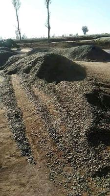 内蒙古自治区巴彦淖尔市临河区361葵花籽