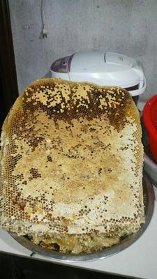 江西省景德镇市乐平市土蜂蜜 桶装 100% 2年以上