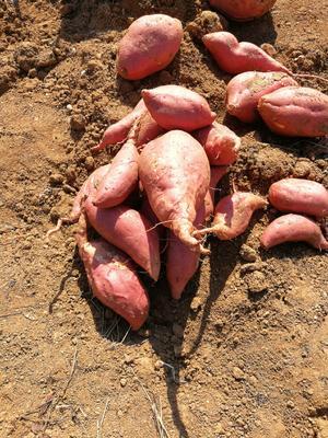 这是一张关于安纳红薯 红皮 6两~1斤的产品图片