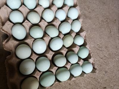 河南省三门峡市卢氏县柴鸡蛋 食用 箱装