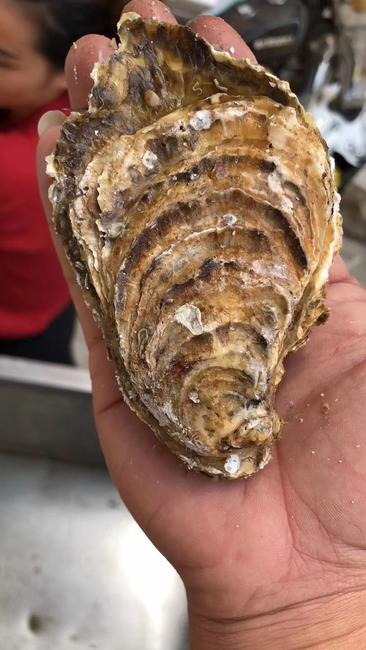 山东乳山牡蛎 人工殖养 2-3两/只