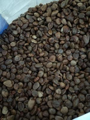 这是一张关于黑老虎种子的产品图片