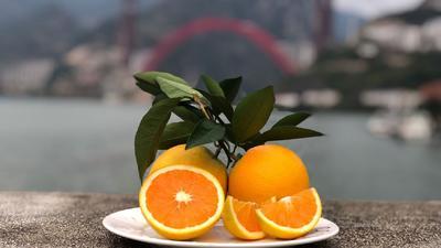 湖北省宜昌市秭归县九月红脐橙 55 - 60mm 4.0两
