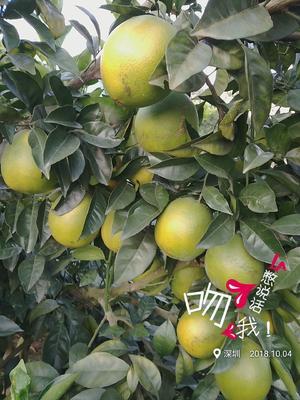 这是一张关于赣南脐橙 85-90mm 4-8两的产品图片