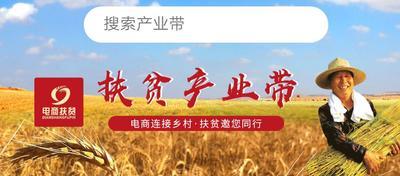 江西省赣州市于都县外三元 100斤以上