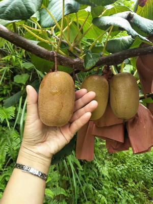 这是一张关于金桃猕猴桃 100~120克的产品图片