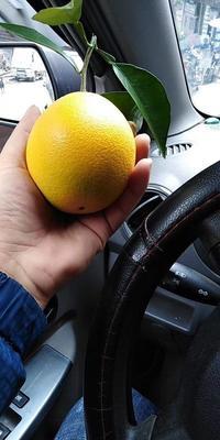 这是一张关于赣南脐橙 55 - 60mm 4-8两的产品图片