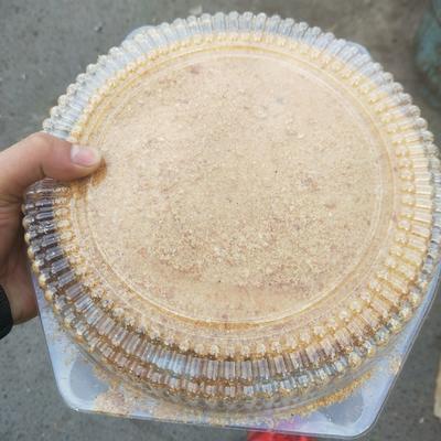 这是一张关于提拉米苏 2-3个月的产品图片