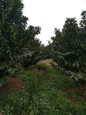这是一张关于果园 转让 20~30年 248.0亩的产品图片
