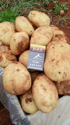 这是一张关于丽薯6号 3两以上的产品图片