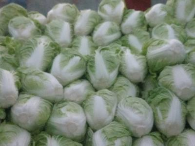 这是一张关于夏阳白菜 3~6斤 净菜的产品图片