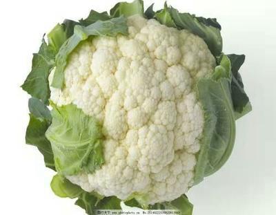 这是一张关于白面青梗松花菜 适中 2~3斤 乳白色的产品图片