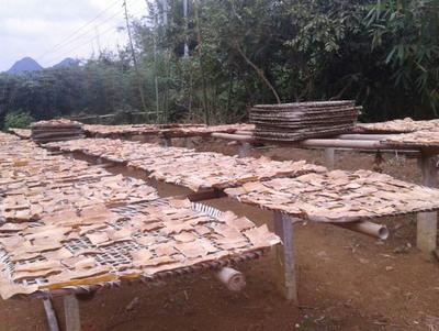 这是一张关于麻笋 30cm以上 笋干的产品图片