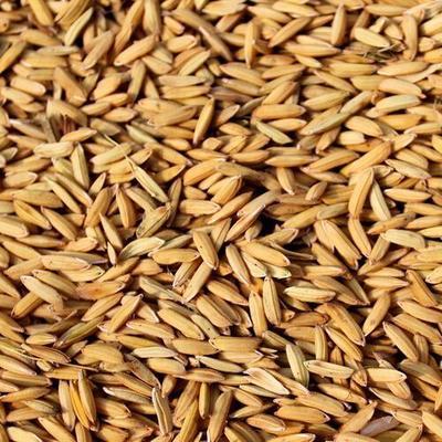安徽省蚌埠市淮上区长粒香大米 绿色食品 早稻 二等品