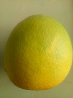湖南省常德市石门县纽荷尔脐橙 80-85mm 4-8两