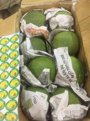 广西壮族自治区百色市靖西县越南红心青柚 1斤以上