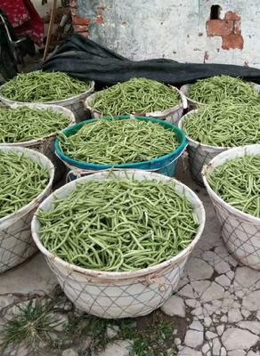 这是一张关于无筋四季豆的产品图片