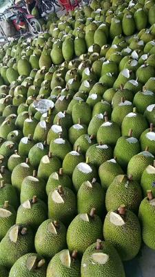 这是一张关于越南菠萝蜜 10-15斤的产品图片