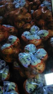 山东省临沂市兰山区蜜柚 2.5斤以上
