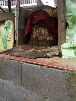 这是一张关于土蜂蜜 桶装 100% 2年以上 的产品图片