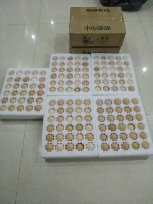 湖北省湖北省仙桃市土鸡蛋 食用 礼盒装