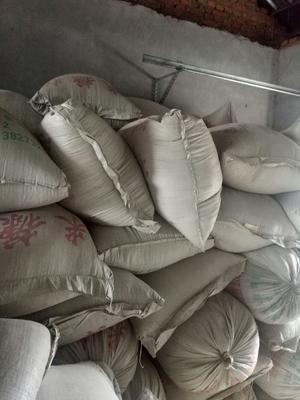 这是一张关于黑水稻 晚稻的产品图片
