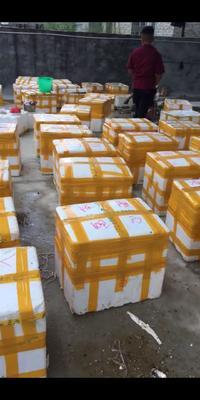 这是一张关于诏安湾生蚝 人工殖养 6两以上/只   的产品图片
