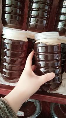 安徽省黄山市屯溪区土蜂蜜 塑料瓶装 95%以上 2年