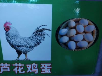 四川省成都市金牛区山地鸡鸡蛋 食用 箱装