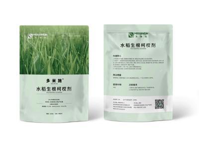 河南省洛阳市涧西区水稻生根 早稻
