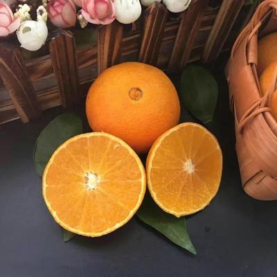 这是一张关于爱媛38号柑桔 3.5 - 4cm 3两以上的产品图片