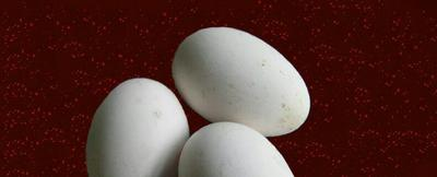 江苏省徐州市沛县种鹅蛋 孵化 箱装