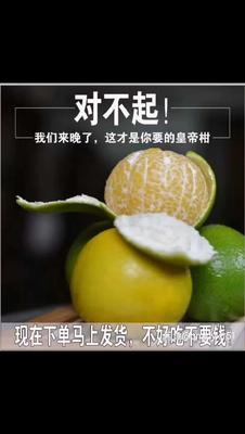广西壮族自治区南宁市武鸣县皇帝柑 6 - 6.5cm 2 - 3两
