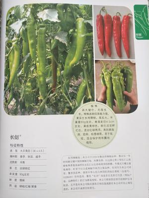 这是一张关于牛角椒种子 99%以上 杂交种的产品图片