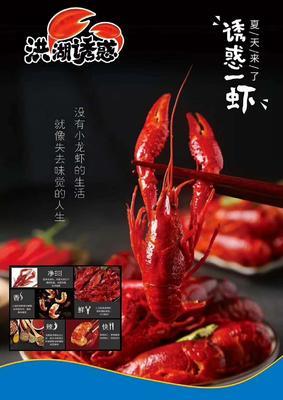 广西壮族自治区南宁市青秀区红壳小龙虾 人工殖养 4-6钱