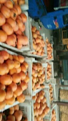 这是一张关于圆柿 3 - 4两以上的产品图片