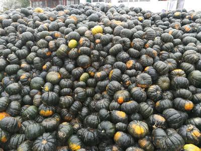 这是一张关于日本南瓜 2~4斤 扁圆形的产品图片
