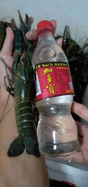 澳洲淡水小龙虾 塘虾 9钱以上